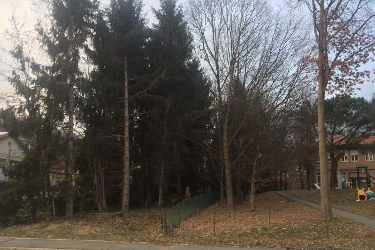 Gli alberi malati che saranno tagliati