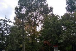 I giardini Zumaglini